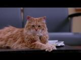 Сверхъестественное прикол с котом