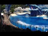 Шоу-3 с дельфинами и акробатами в стиле цирка дю Солей (Cirque du Soleil) .