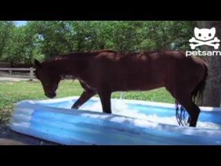 Distraction: Horse makes a big splash in kiddie pool