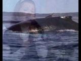 Л. Грицак: Океан Божьей любви.