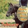 Продажа лошадей из России и Европы