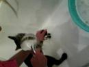 как надо мыть кота.