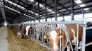 Бизнесмены из Бразилии могут создать в Крыму мясоперерабатывающий комплекс