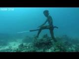 Поиск видеозаписей по запросу подводная охота