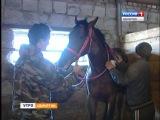 Спортивное коневодство деревня Старые Ключи Алнашский район Удмуртия