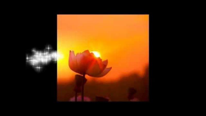 Флейта и пение птиц - Целительные Звуки Природы - 4 ☯ Релакс Музыка