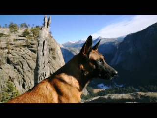 ADVANCED CANINE SOLUTIONS | THE JOURNEY