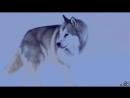 Белый Плен ( Переделанный трейлер )