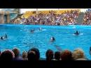 Люди и Дельфины - Дружба