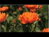 Блаженство--Игорь Двуреченский