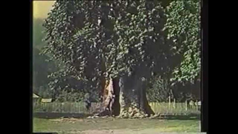 Абхазия - цветущий край 1958 год. Абхазская ССР.