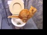 Как отучить кошку гадить? кот гадит засранец!