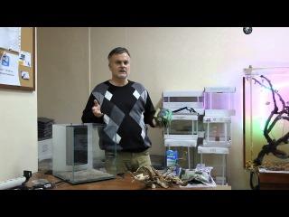 Запуск нано аквариума 40 литров с Дмитрием Кашкаровым (HD)