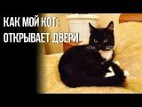 Как мой кот: открывает двери