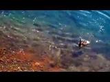 Щука съела утенка. рыбалка,русская рыбалка, рыбалка видео, рыбалка 2015