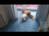 Степенный кот и шустрая собачка)