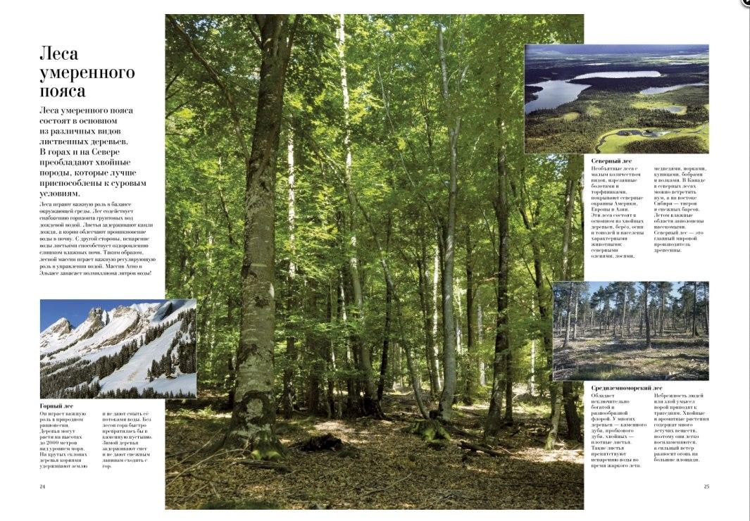детская книга про деревья