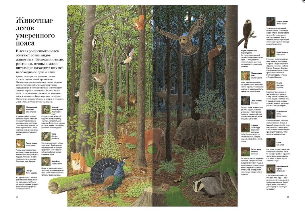 Купить книгу о деревьях