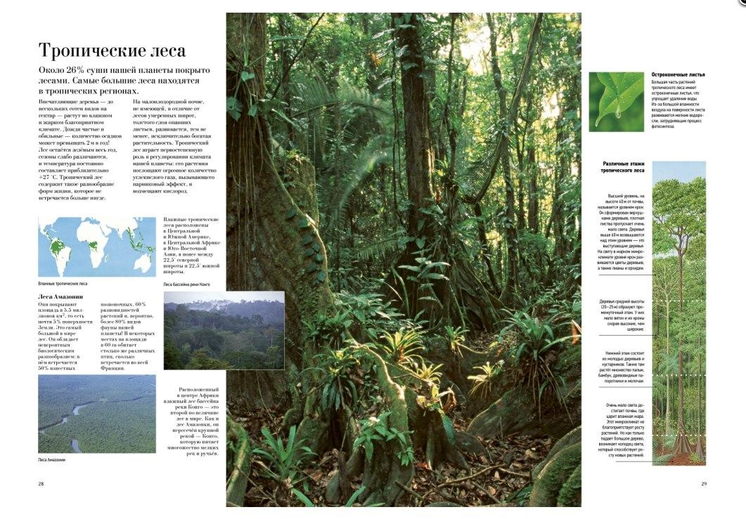 детская книга все о деревьях