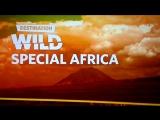 Nat Geo Wild Special Africa
