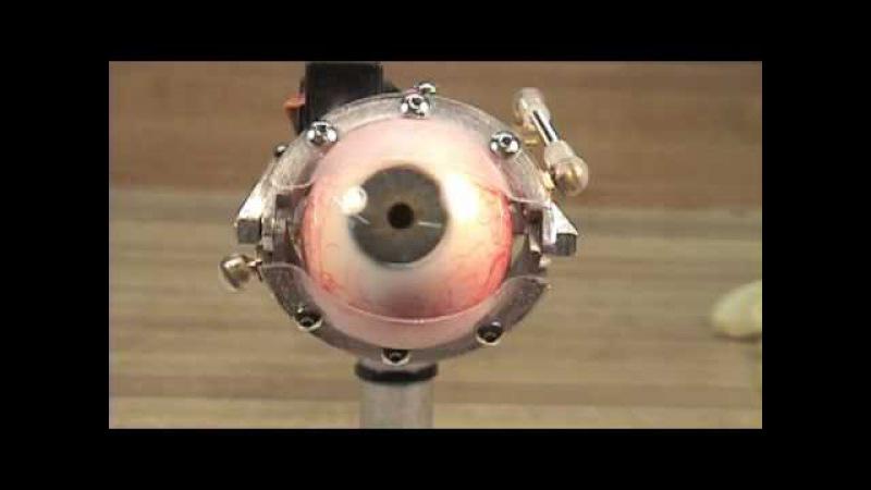 Animatronic Eye Mechanism-Human Eye