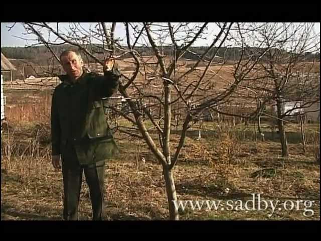 Несколько советов по обрезке деревьев