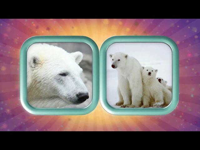 Мультики - Загадки про Животных - Прыг и Скок - Белый Медведь vekmnbrb - pfuflrb ghj ;bdjnys[ - ghsu b crjr - ,tksq vtldtlm