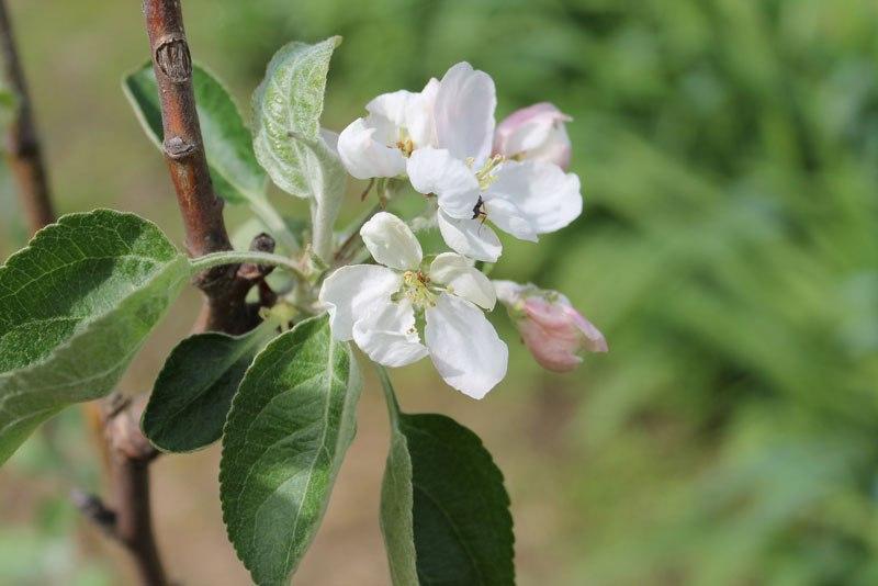 Май - календарь работ на май для садоводов, цветоводов, огородников