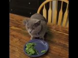 Cныкался кот проказник. Прикольный Кот спрятался от хозяина