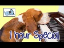 1 HOUR DOG MUSIC SPECIAL! Relaxing Music for Puppies and Dogs! Help your Dog to Calm Down 🐶 RMD07