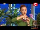 Как сделать браслет из бусин и булавок - Все буде добре - Выпуск 133 - 18.02.2013 - Все буд...