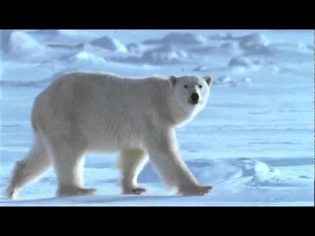 Песенка про белых медведей Монтаж Раиса Семенова