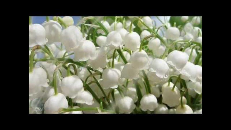 Весна пришла Оркестр Поля Мориа Love story Paul Mauria Композитор Франсис Лэ Francis Lai