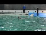 Дельфинарий на Крестовском СПБ. Танцы Сонечки и Полиночки:)