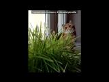 ВЫПУСКНИКИ питомника COLOROLLA под музыку Китайская классическая музыка - Цветущая вишня (Вариант 2.Инструмент Эрху). Picrolla