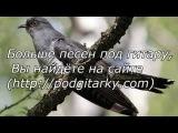 Каскад Афганская песня-Кукушка (cover)