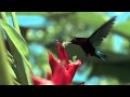 Очень красивое видео !