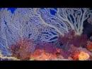 Релакс видео красивых мест на планете в HD и музыка для массажа - манани