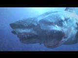 3 Headed Shark Attack (Атака трёхголовой акулы) (Трейлер)