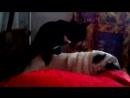 кот занимается сексом с собакой