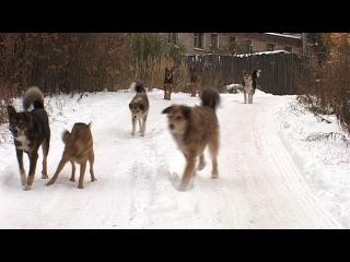 Брошенные собаки на улицах города.