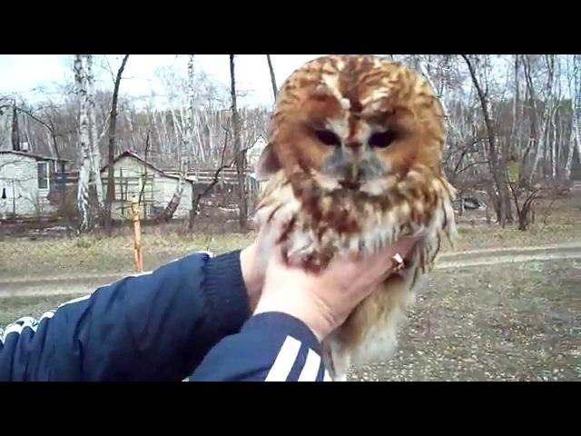 поймали сову We caught an owl