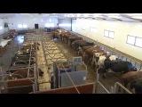 Семейные фермы северной Норвегии, фильм первый