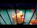 Попугаи, которые видели секс, любят позу 69 - Parrots love to pose 69 Такого еще не видели. Хит 2015