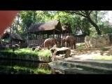 а что вы знаете о сексе слонов?)