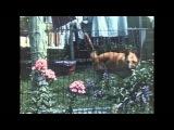 Isaac Delusion - Pandora's Box