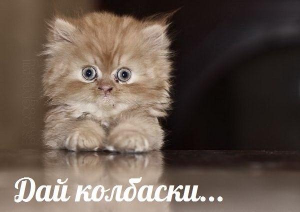 Доска объявлений котята фото красивые