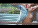 транс вокал видео клип№4 2015