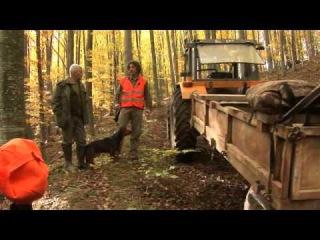 Охотничьи просторы. Фильм 2. Охота на кабана в Хорватии (часть 1)