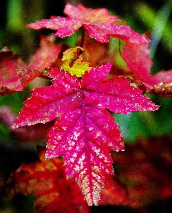Autumn time ... - Pagina 2 E5xB3uxxsBQ